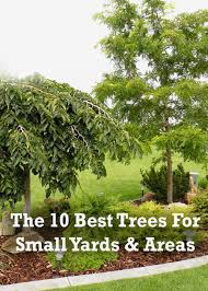 cool design best small trees for front yard landscaping marvelous
