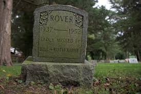 crushingly sad photos of one of america u0027s oldest pet cemeteries vice
