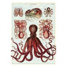cavallini poster cavallini vintage school poster octopods kado in huis