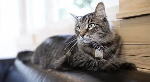 en gastroenteric cat food pro plan veterinary diets