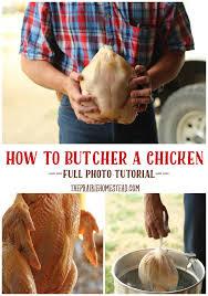 how to butcher a chicken u2022 the prairie homestead