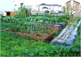 Vegetable Garden Design Ideas Small Gardens Home Design And - Backyard vegetable garden designs