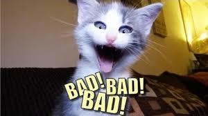 Talking Cat Meme - talking kitty cat 30 demon cat