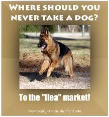 Funny German Shepherd Memes - fleamarket jpg