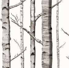 birch trees wallpapers add a natural touch to your home