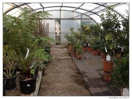 construction d une serre de jardin en bois comment protéger du vent ses cultures pour pas cher se