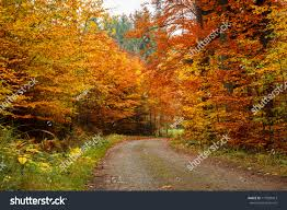 colored trees autumn road forrest stock photo 117029413