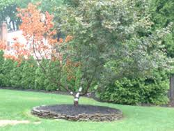trees with health problems change color or drop leaves early