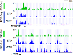 ijms free full text dna break mapping reveals topoisomerase ii