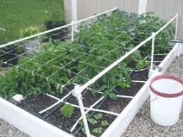 How To Grow Cucumbers On A Trellis Growing Vertical U2013how To Support Your Plants U2013 My Square Foot Garden