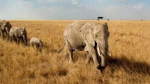 safari africa tours safaris u0026 kilimanjaro climbs travel with rei