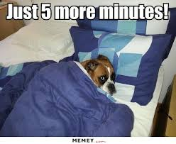 Dog In Bed Meme - a dog in the bed memey com