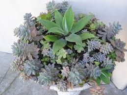 succulent container gardening tended