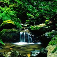 Amazing Pictures Of Nature by Amazing Nature Theme Android Apps On Google Play