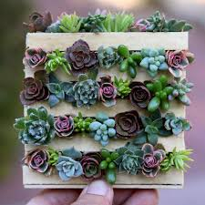 miniature cuteness diy mini pallet with succulents just