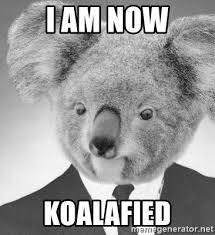 Koala Meme Generator - i am now koalafied business koala meme generator