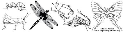 coloring pages insects bugs insect coloring page insect coloring pages elegant bugs and insects