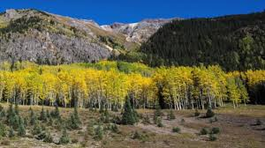 Uccs Map Colorful Colorado U0027s Changing Leaves Signaling That Fall Is Here