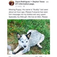 affenpinscher in texas lost dogs in shepherd tx lost my doggie