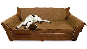 sofa design fabulous dog couch pretty dog beds mini couch