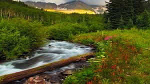beautiful scenery and mountainous river green trees