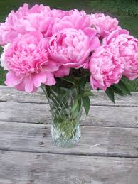 peony flower delivery absorbing pink peony flowers in photos together with vase also