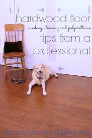 dog and hardwood floors hardwood floor sanding and staining tips and tricks
