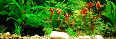 silver dollar aquarium negombo sri lanka tropical fish