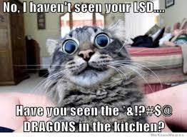 Funny Kitten Meme - silly cat memes image memes at relatably com