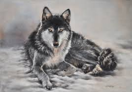 black and grey wolf gray wolf gray wolf and wolf