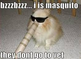 Clean Animal Memes - funny animal pictures clean impremedia net
