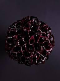black calla black calla heaven larry walshe floral design