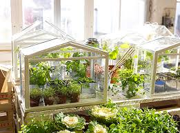 Build Your Own Indoor Garden - ikea u0027s miniature greenhouse lets anyone create their own indoor