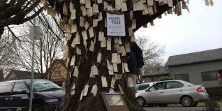 wishing tree how one wishing tree brought an entire community together huffpost