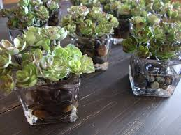 bonsai succulents in square vase with illusion faux water wedding