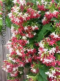 36 best plant love images on pinterest flowers plant and