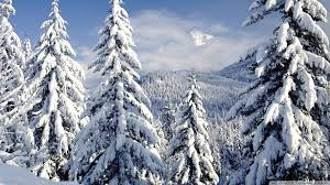 snowy trees wallpaper 1920x1080 79851 winter