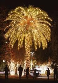 pam trees with christmas lights 02 2012 christmas palm the sc