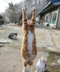 Fat Cat Meme - a fat cat praying to the sky while his friends patiently await the