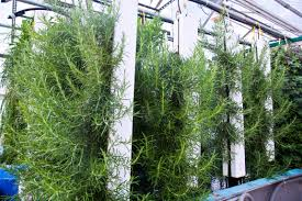 inside greenhouse ideas indoor hydroponic farming costs and profits without the fluff
