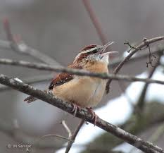 Ohio birds images Feeding backyard birds the right way involves more than seed suet jpg