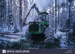 forestry machine with chains on tyres felling pine trees in snow