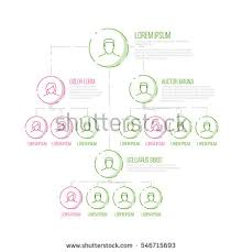 company management hierarchy schema template thin stock vector