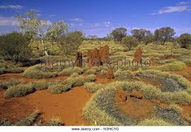 old spinifex rings little sandy desert australia wallpapers spinifex plains stock photos u0026 spinifex plains stock images alamy