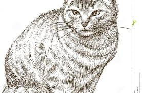 tag for cute cat drawing sitting cute cat and dog drawing sit