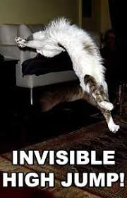 Invisible Cat Memes - our picks for the 10 best cat memes of all time