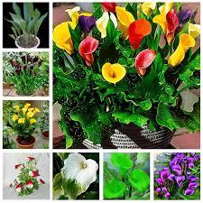 popular small garden flowers buy cheap small garden flowers lots