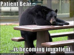 Patient Bear Meme - patient bear is losing patience with your shenanigans patient bear
