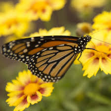 butterfly festival mizzou events