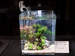 Aquascape Tank Aquascaping Live 2016 Small Planted Tanks